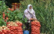 Tarımın yükünü kadınlar omuzluyor